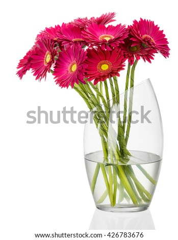 Flowers. Red gerbera flowers in a vase. - stock photo