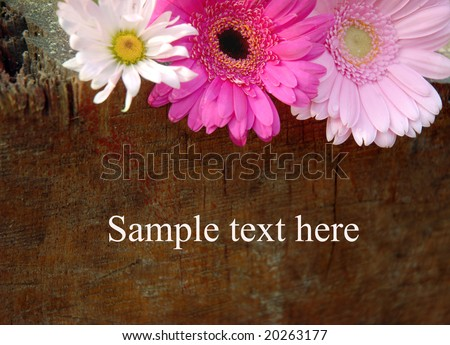 Flowers sign with sample text on wooden board, billboard - stock photo