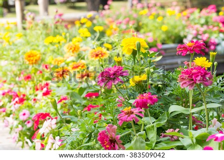 flowers that bloom in the garden The colors of the flowers planted trees. - stock photo