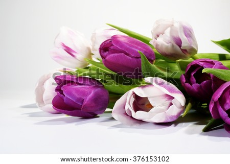 Flowers - Tulips, Tulip