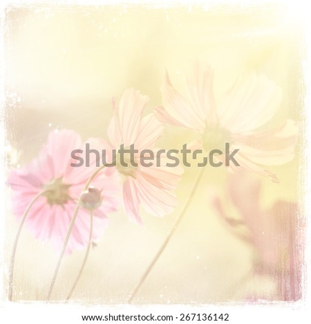 flowers  vintage background - stock photo