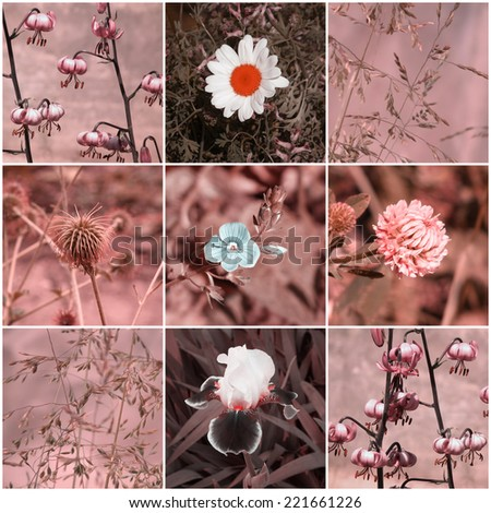Flowers. Vintage floral collage. Filtered image. - stock photo