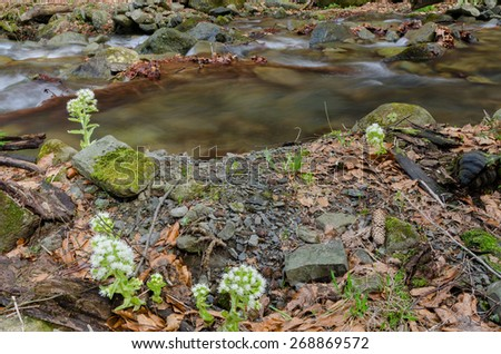Flowers with creek - stock photo