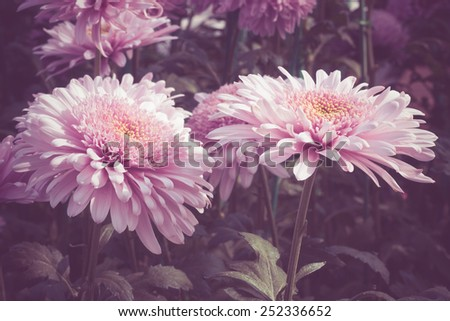 flowers with filter effect retro vintage style - stock photo