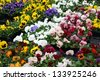 flowers with petals multicolor for sale in a greenhouse of a florist - stock photo