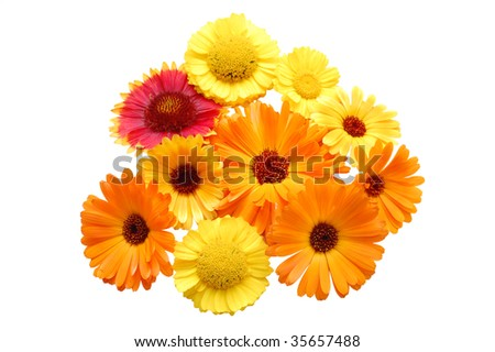 Flowers with yellow petals on a white background - stock photo