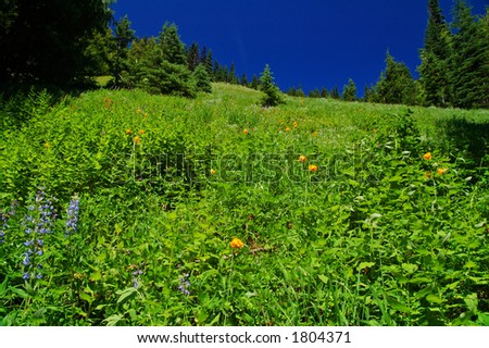 flowery mountain meadow on a summer day in Olympic National Park - stock photo