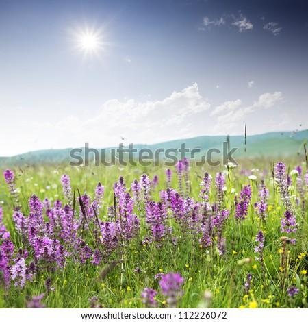 flowrs with blue sky - stock photo