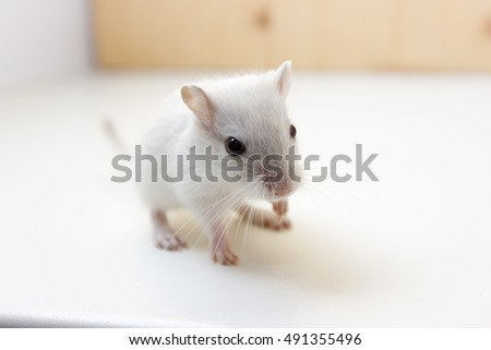 Gerbil Stock Images, Royalty-Free Images & Vectors | Shutterstock