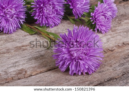 Fluffy blue asters on an old wooden table - stock photo