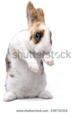 Fluffy Bunny Standing on Two Feet