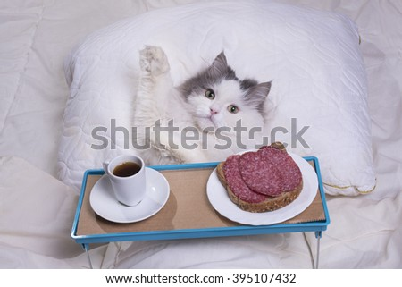 fluffy cat got breakfast in bed
