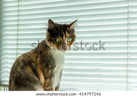 Fluffy domestic cat with big green eyes