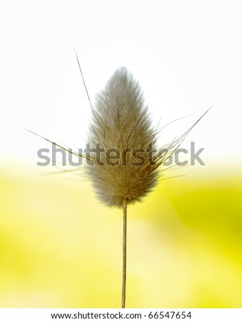 fluffy flower on white and yellow