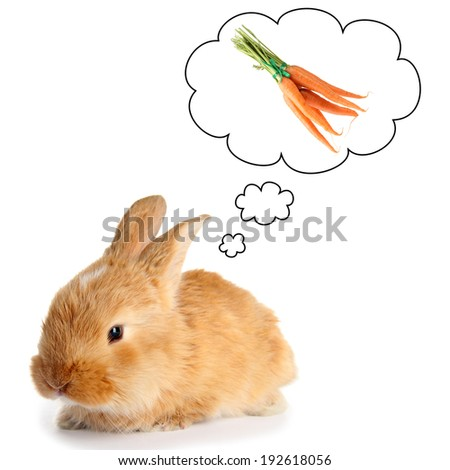 Fluffy foxy rabbit dreaming of carrot,  isolated on white - stock photo