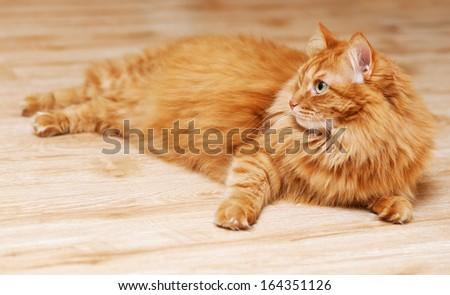 fluffy ginger cat lying on wooden floor in profile - stock photo