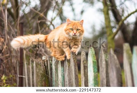 Best cat deterrent for garden