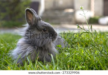 fluffy gray rabbit on the grass - stock photo