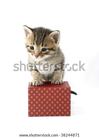 Fluffy kitten on a red box