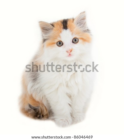 Fluffy kitty isolated on white - stock photo