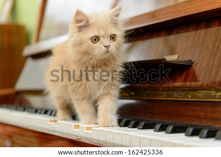fluffy Persian kitten walking on the piano - stock photo