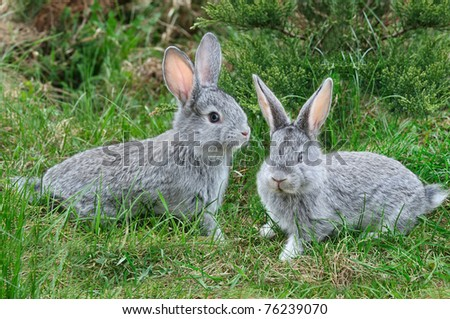 fluffy rabbits on the green grass - stock photo