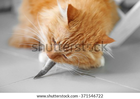 Fluffy red cat eating fish - stock photo