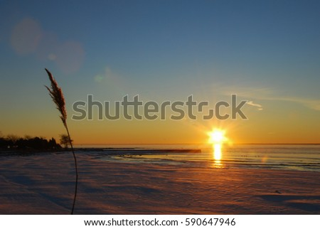Fluffy reed flower by winter season at an icy bay at sunset