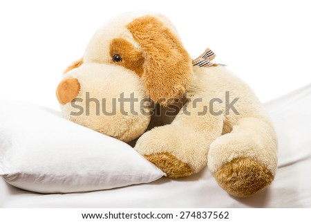 Fluffy soft toy dog lying on the bed with a pillow on a white background - stock photo