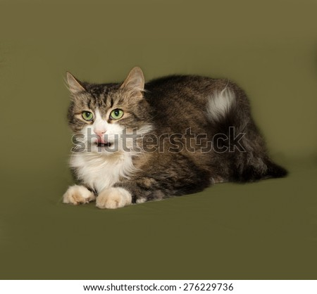 Fluffy tabby and white cat lies on green background - stock photo