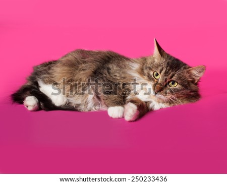 Fluffy tabby kitten lying on pink background - stock photo