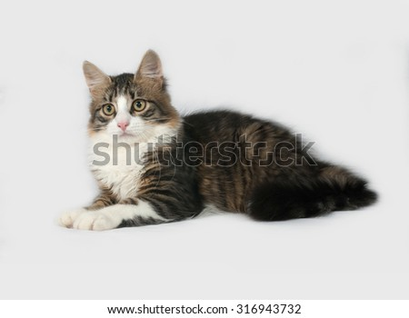 Fluffy white and tabby cat lies on gray background - stock photo