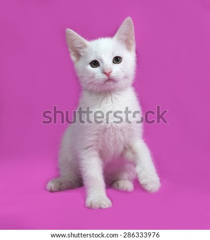 Fluffy white kitten sitting on pink background