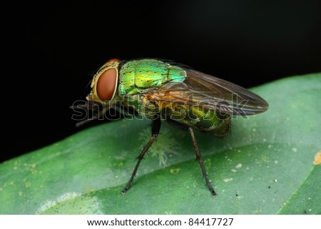 fly - stock photo