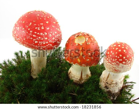 Fly agaric mushrooms isolated over white background.