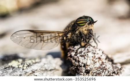 Fly - Bug - stock photo