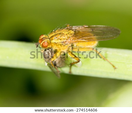 fly in nature. close-up