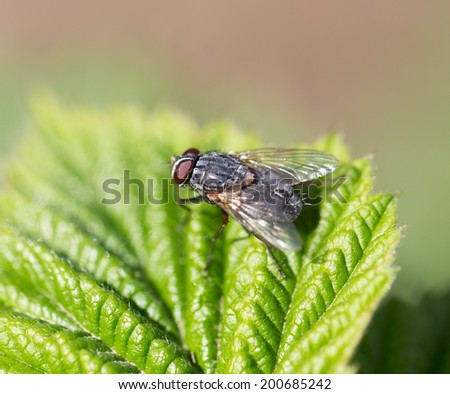 fly in nature. Macro - stock photo