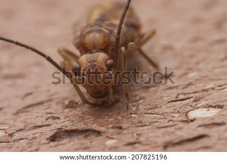 fly insect - stock photo