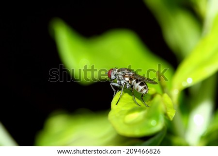 Fly insect on leaf