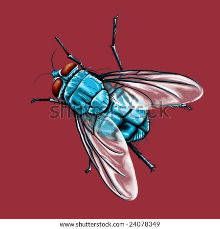 fly isolated - stock photo