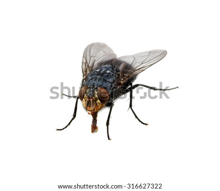 mon House Fly Musca Domestica Macro 21858790 on tiny house show