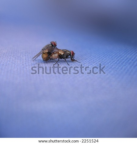 Fly Me - stock photo