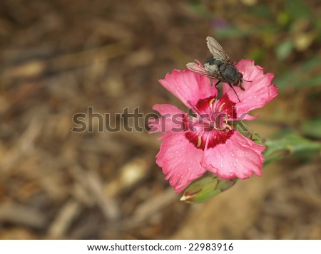 fly on a flower - stock photo