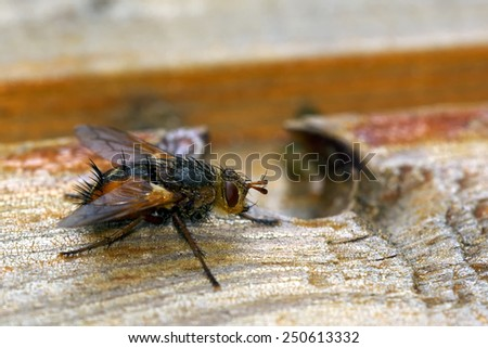 Fly on wood