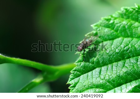 fly sitting on a leaf - stock photo