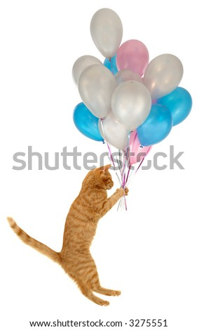 Flying balloon cat. Taken on clean white background. - stock photo