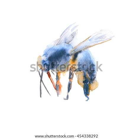 flying bee. insects. isolated on white background. watercolor illustration.