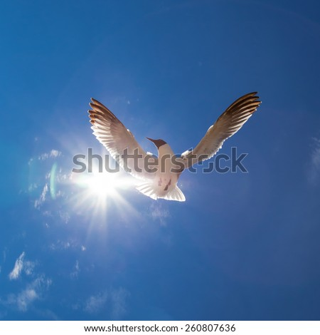 Flying bird in the sky