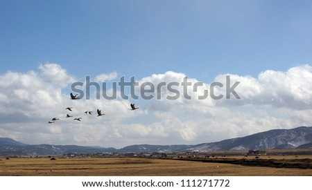 flying bird in the sky and clouds wit the land horizontally - stock photo